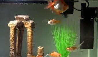 How Does a UV Sterilizer Work in an Aquarium