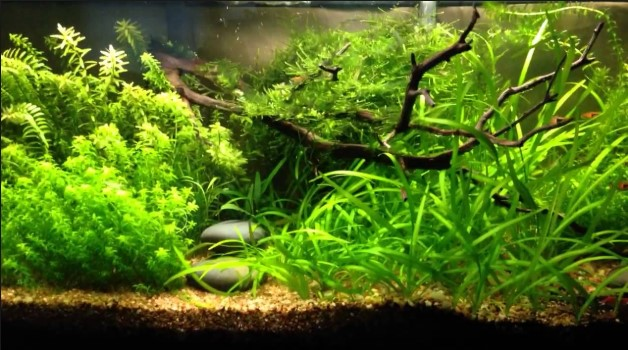 How to Make Aquarium Plant Fertilizer