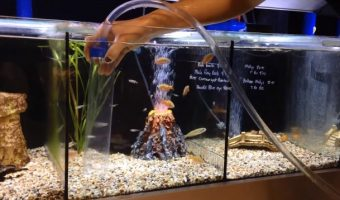 How to Use an Aquarium Vacuum Cleaner?