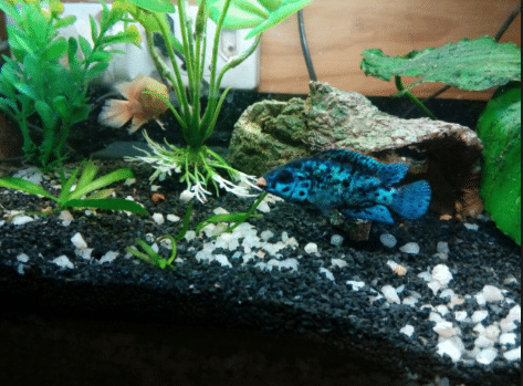 Why You Should Use Gravel in Aquarium