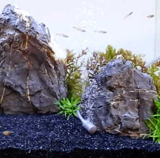 The Best Aquarium Air Stones For Fish Tank & Circulation System