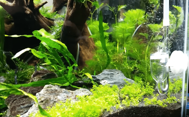 The Best CO2 Diffusers For Your Aquarium Plants