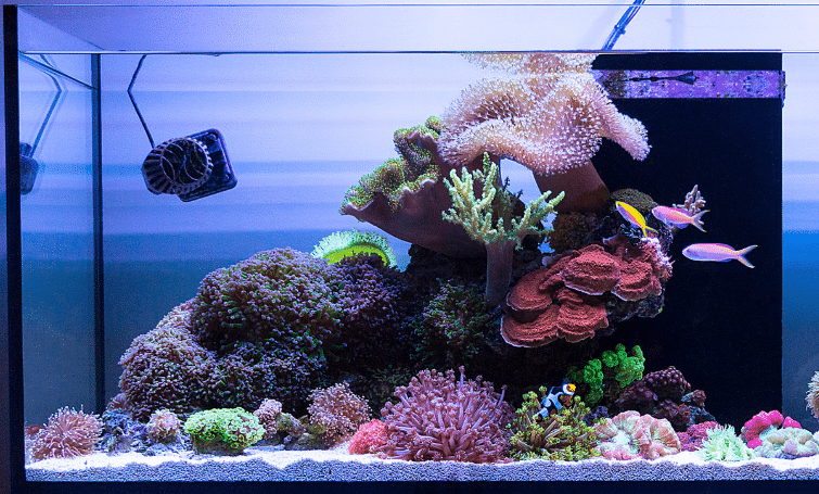 The Best Sand For Reef Tank, Saltwater Aquariums
