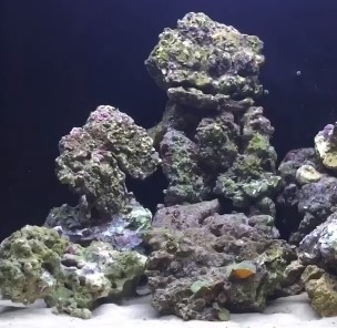 The Best Rocks For Freshwater or Saltwater Marine Reef Tanks