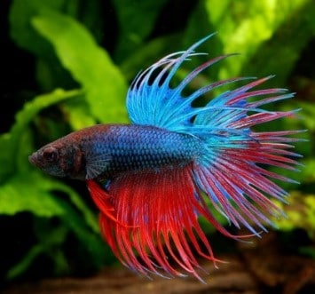 The Best Betta Water Conditioner - Makes Tap Water Safe for Bettas