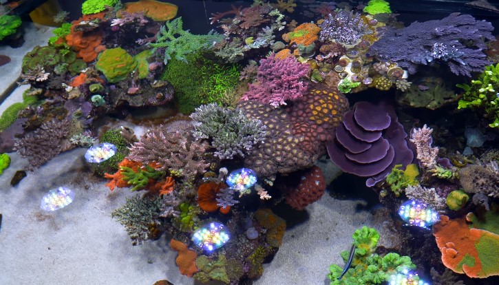 5 Best RO DI System for Reef Tank, Saltwater Aquarium (2019