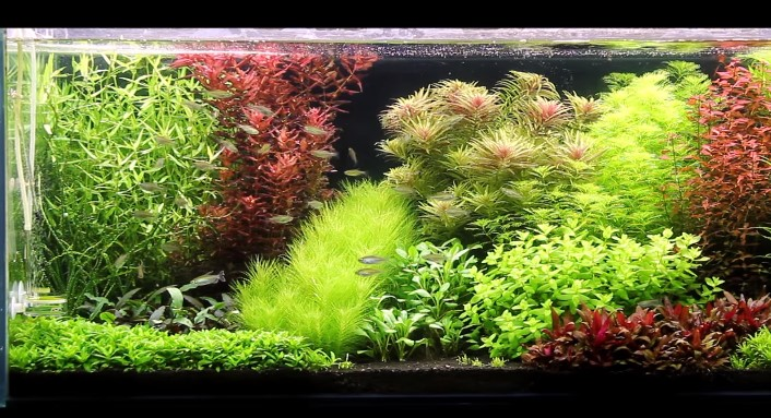 Best-Substrate-for-Planted-Tank