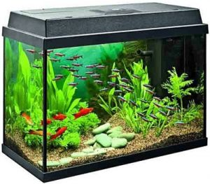 Best 10 Gallon Fish Tanks Available Today?