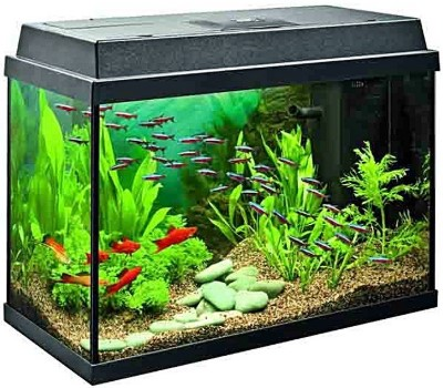 The Best 10 Gallon Fish Tank Kits - All For Starting an Aquarium