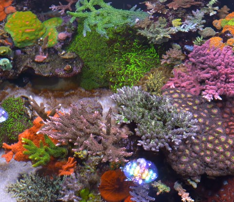 The Best Aquarium Return Pumps for Your Marine Saltwater Tanks