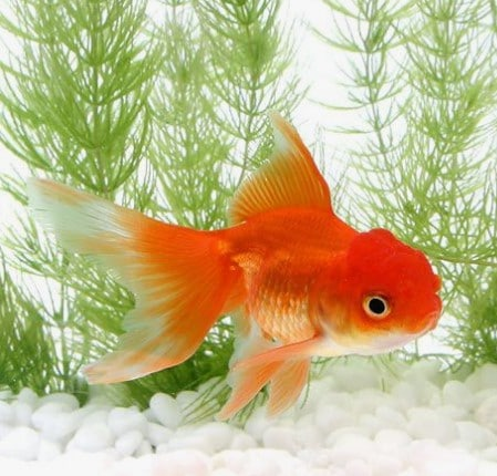 The Best Goldfish Filters For a Healthy Aquarium