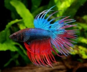 Best Plants for Betta Fish: Live & Fake Options