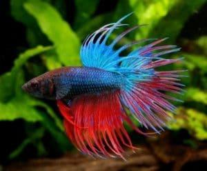 10 Best Plants For Betta Fish Live Amp Fake Betta Plants