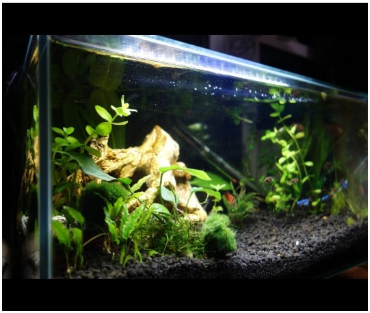 Black Substrate Aquascape - Aquascape Ideas