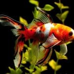 Why is My Goldfish Turning Black? How to Diagnose, Cure, and Prevent Sickness