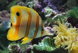 Best Tropical Fish Food for Color & Growth