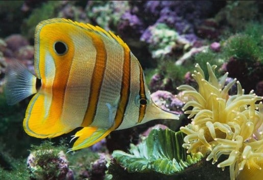 The Best Tropical Fish Food For Color & Growth