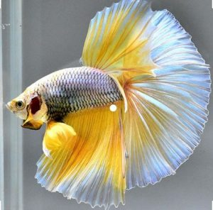 Best Betta Fish Tanks Reviews