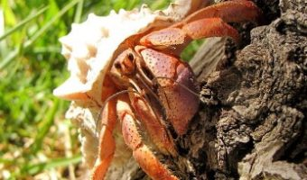 How to Take Care of Hermit Crabs?