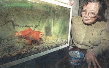 Oldest Goldfish