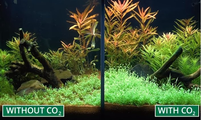 Best Co2 System For Planted Aquariums