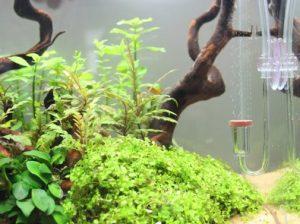 Best CO2 System for Planted Aquarium - (2019 Reviews) & Guide