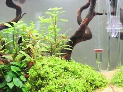 The Best CO2 System For Planted Aquarium, Plants Growth
