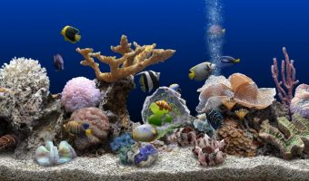 Best Saltwater Aquarium Fish for Beginners