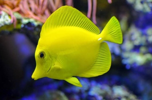 18 Best Saltwater Aquarium Fish for Beginners - Aquarium Adviser