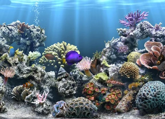 This is an image of Unusual Fish Tank Background Printable