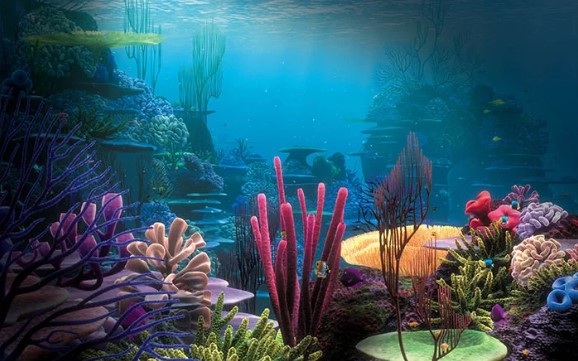The Best Aquarium Backgrounds for Types of Tanks