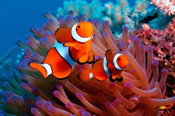 The Best Aquarium Monitoring System & Controllers