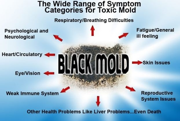 Mold affecting health