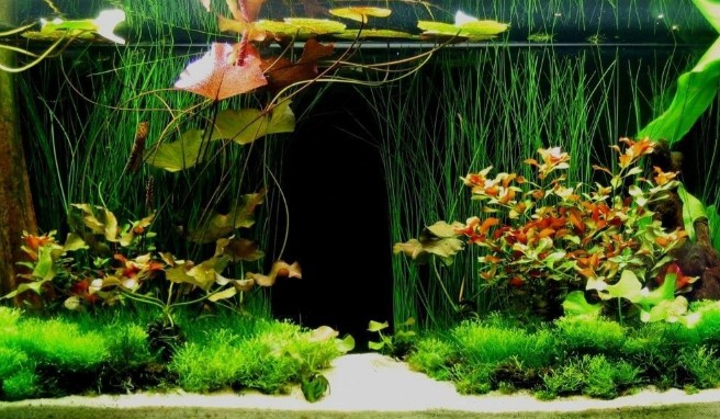 The Best Silk Aquarium Plants: Natural-looking & Safe For Fish
