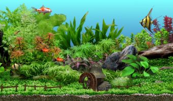The 21 Best Tropical Aquarium Fish – Types of, Set up & Care