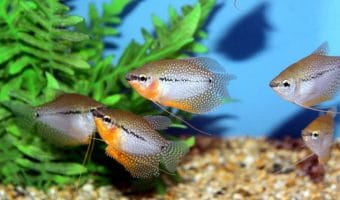 The 15 Exotic and Cool Freshwater Aquarium Fish