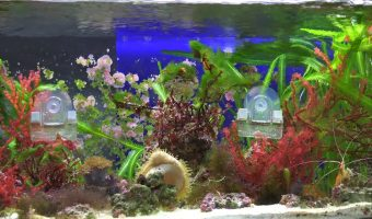 The 10 Live Saltwater Aquarium Plants - Guide & Care
