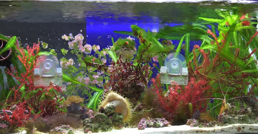 The 10 Live Saltwater Aquarium Plants Guide Care