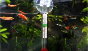 Temperature for Fish Tanks
