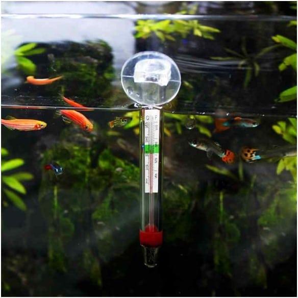 Temperature for Fish Tanks