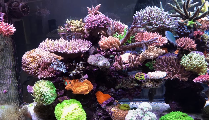 The Best Nano Reef Light For Coral Needs to Grow