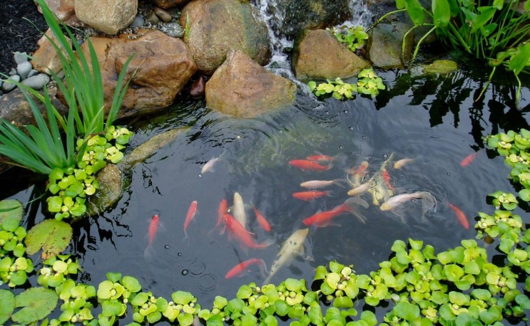 The Best UV Lights For Your Koi Ponds