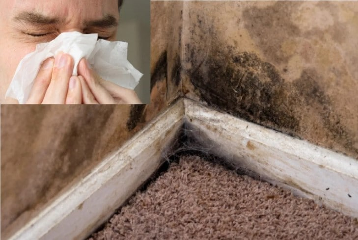 What are the Effects of Mold and Mildew?