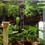 Best Aquarium Heaters