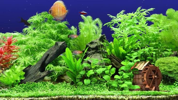 Best Artificial Aquarium Plants