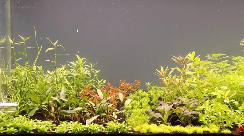 How to Care for Aquarium Plants?
