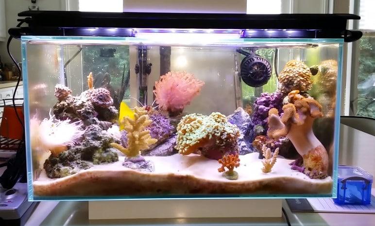 Reef Tank Size
