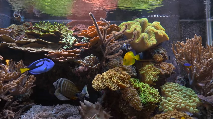 Reef Tank Temperature - Everything You Need to Know