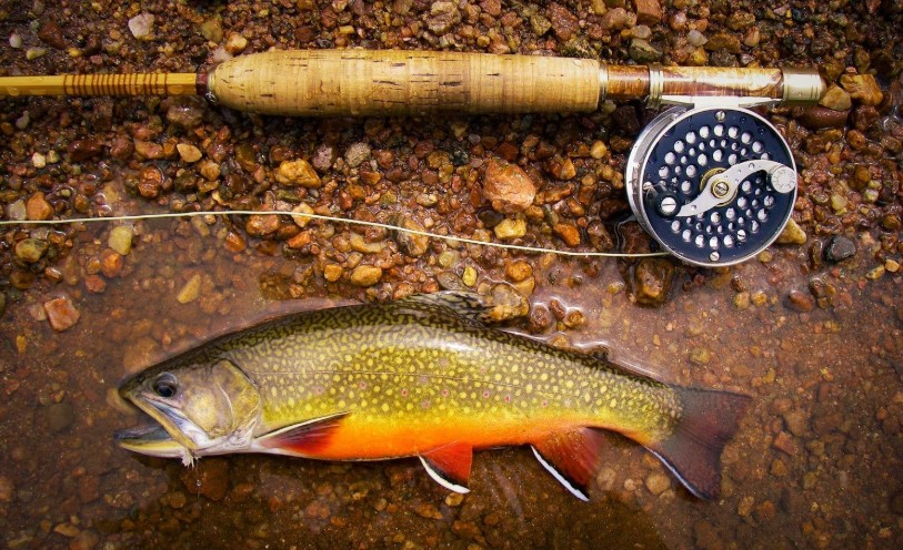 The Best Fishing Line For Trout In All Situations