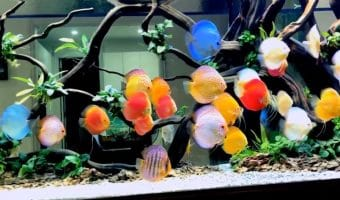 Step by Step Starting a Discus Tank